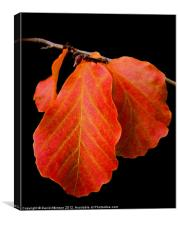 AUTUMN RED LEAF, Canvas Print