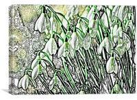 SNOWDROP SKETCH, Canvas Print