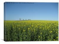 Field of Rape seed, Canvas Print
