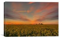 Rapeseed sunset, Canvas Print