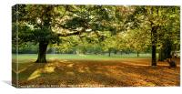 Autumn Morning in the park, Canvas Print