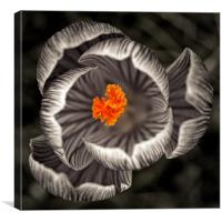 Gothic Crocus, Canvas Print