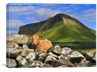Cow and Ben Bulben, Canvas Print