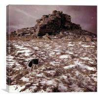 Whippet at Wintry West Mill Tor, Canvas Print