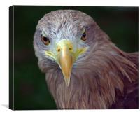 Bird of Prey, Canvas Print