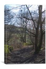 Woodland path between Golcar and Linthwaite, Canvas Print