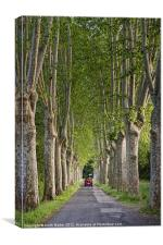 Plane tree Avenue, Canvas Print