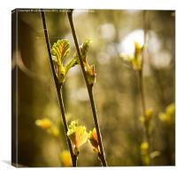 For Dappled Things, Canvas Print
