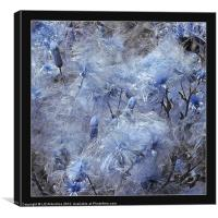 Thistle Down in Blue, Canvas Print
