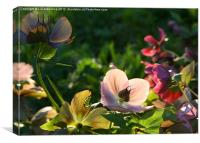 Hellebores in Evening Light, Canvas Print