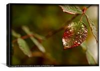 Rose Leaf, Canvas Print