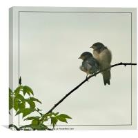 Fledglings, Canvas Print