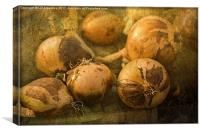 Onions, Canvas Print