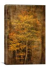 Golden Birch, Canvas Print