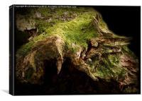Stump World, Canvas Print