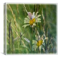 Dreaming of Summer, Canvas Print