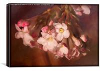 Pink Viburnum, Canvas Print