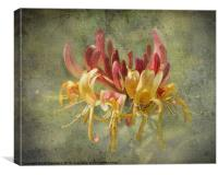 Honeysuckle, Canvas Print