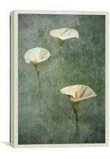 Peace, Canvas Print