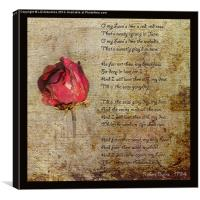 Love is like a red, red rose.., Canvas Print