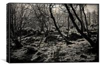 The Wild Wood, Canvas Print