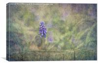 Muscari, Canvas Print