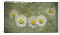 Daisy Chain, Canvas Print