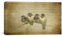 Vintage Swallow Fledglings, Canvas Print
