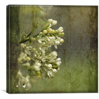 Lilac in the Rain, Canvas Print
