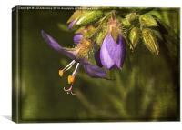 Delicate in Purple, Canvas Print
