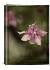 Floral Symphony, Canvas Print
