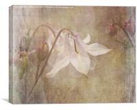Gentle Dancer, Canvas Print