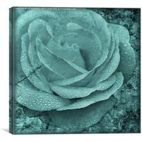 Distressed Rose in Teal, Canvas Print
