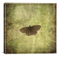 Ringlet Butterfly, Canvas Print
