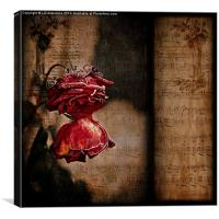 Winter Roses, Canvas Print