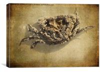 Barnacles , Canvas Print