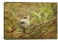 Young Sparrow, Canvas Print