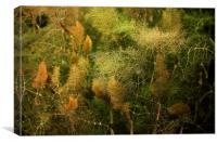 Fennel , Canvas Print