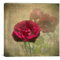 Red Velvet Rose, Canvas Print