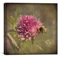 Little Bee, Canvas Print