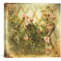 Rambling Rose (Sepia), Canvas Print