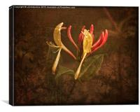 Honeysuckle Time, Canvas Print