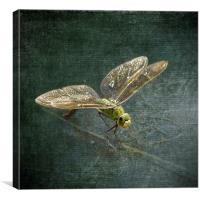 Emperor Dragonfly , Canvas Print