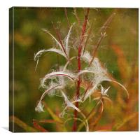 Willow Herb Seeds, Canvas Print