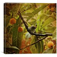 Juvenile Blackcap , Canvas Print