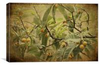 Blackcaps and Lemons, Canvas Print