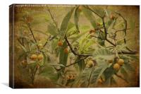 Blackcaps and Lemons (Sepia), Canvas Print