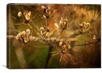 Autumnal Hues, Canvas Print