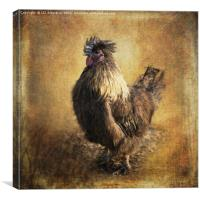 Silkie Cross, Canvas Print