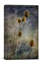 Teasels at Crail Harbour, Canvas Print